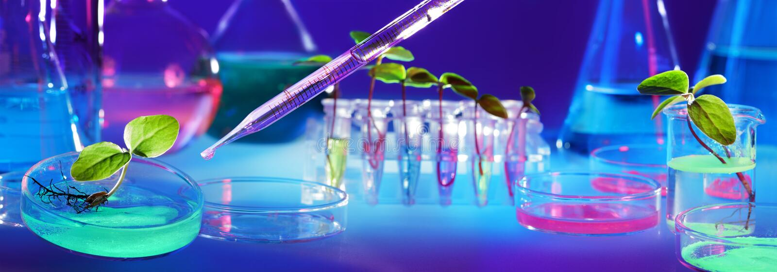 Biotechnology And GMO - Plants In Test Tubes stock images