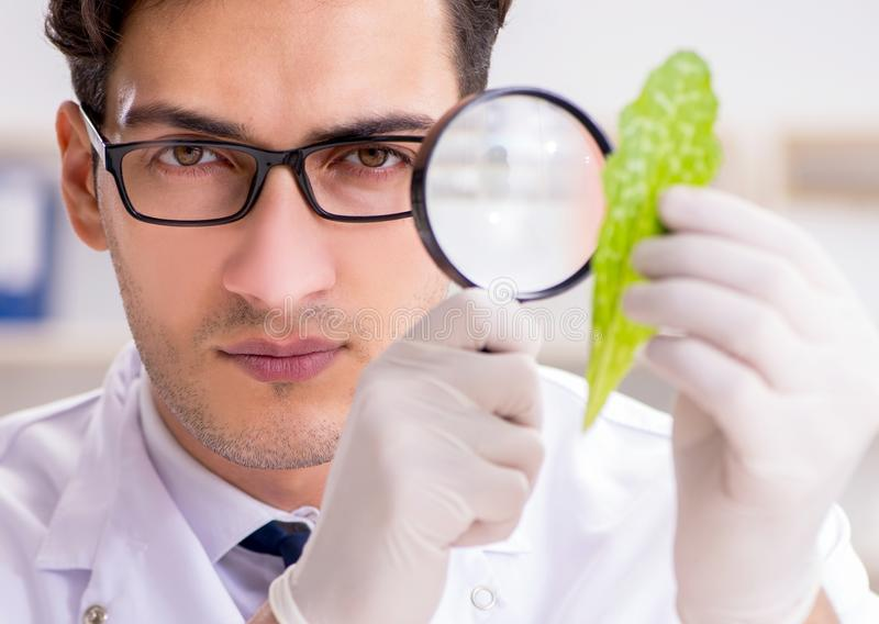 The biotechnology scientist chemist working in lab royalty free stock images