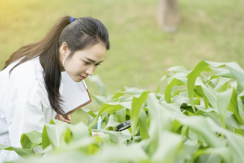 Biotechnology woman engineer examining plant leaf for disease stock images