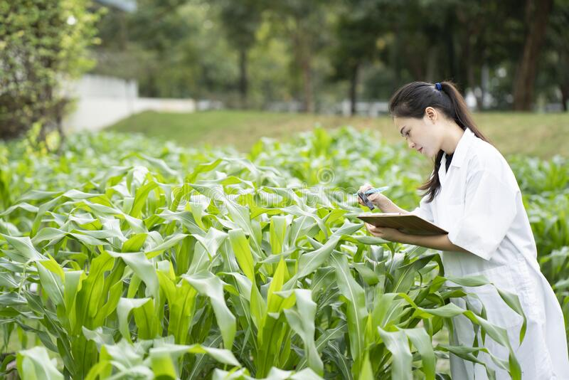 Biotechnology woman engineer examining plant leaf for disease, science and research concept. Close up royalty free stock image
