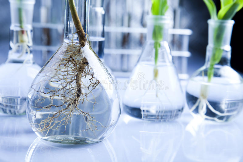 Biotecnologia fotografia de stock