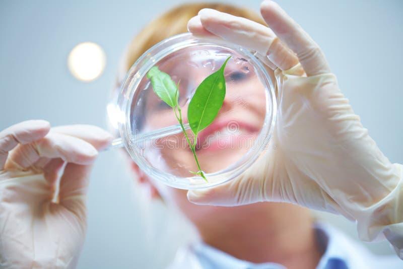 Biotecnologia fotografia de stock royalty free