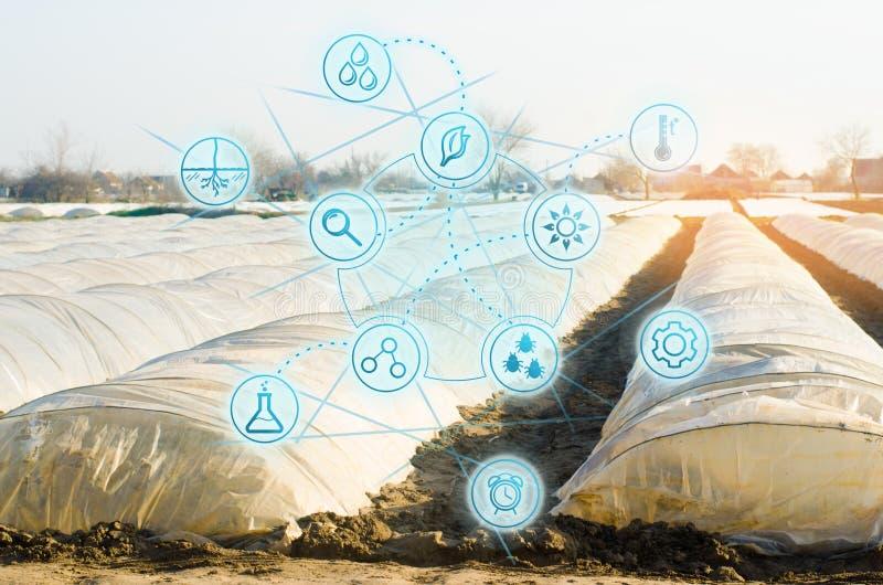 Bioteknik i denkulturella branschen H?ga teknologier och innovationer Lantbruk och agronomi Val av jordbruks- royaltyfria foton