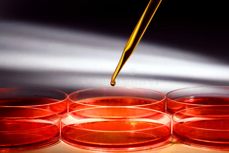 Bioteknikexperiment i vetenskapsforskninglaboratorium royaltyfri bild