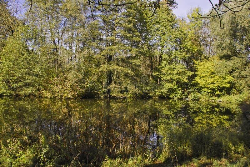 Biotopo mojado con la charca en bosque mezclado fotografía de archivo libre de regalías