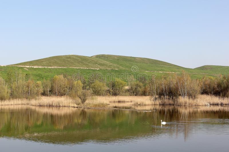 Biotopsee lake with swan and Arkenberge hill in Berlin in spring. The Arkenberge in Blankenfelde in the north of Berlin was originally a natural range of hills royalty free stock images