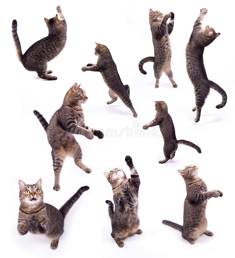 Download The biped cat stock photo. Image of feline, jump, background - 11823778