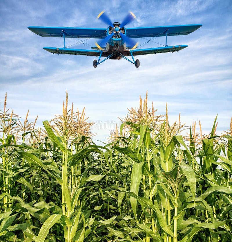 Biplane. Over a maize field royalty free stock images