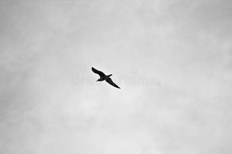 Bir Flying Under White Sky At Daytime Free Public Domain Cc0 Image