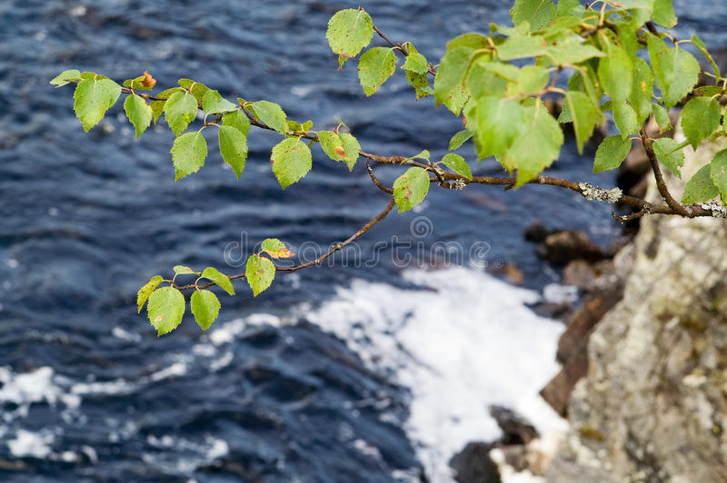 Download Birch stock photo. Image of river, grows, cliff, tree - 13257930