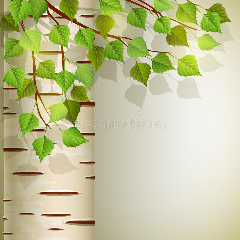 Birch stock illustration