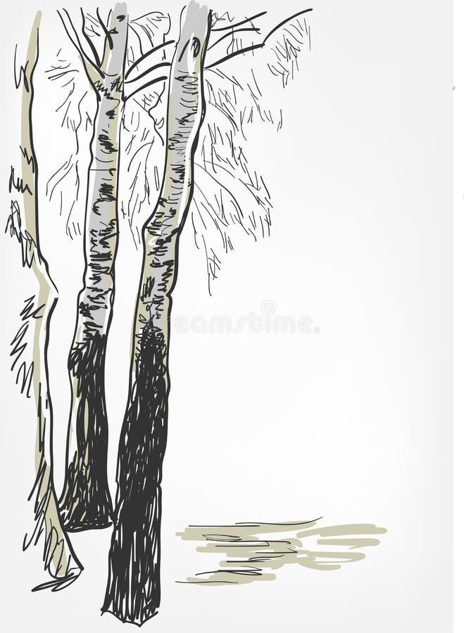 Birch background vector sketch line watercolor tree stock illustration
