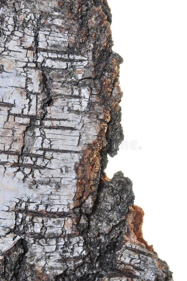 Download Birch bark stock photo. Image of isolated, background - 28169770