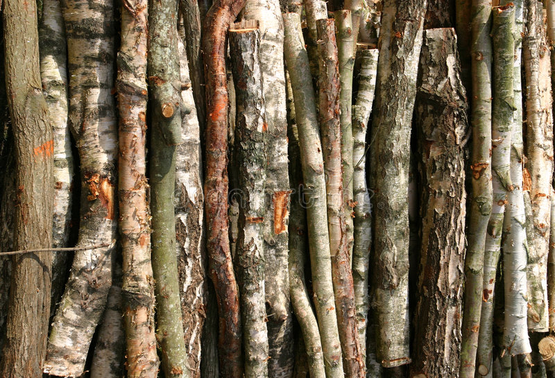 Download Birch Bark Background stock photo. Image of logs, sawn - 102044