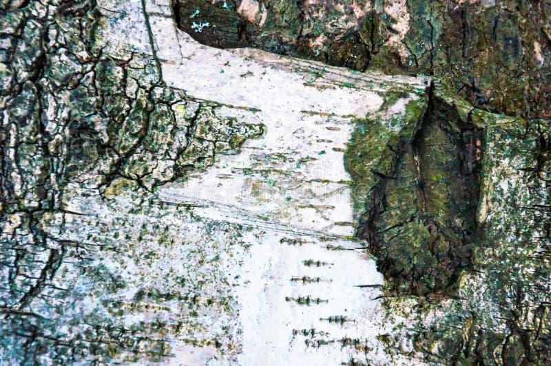 Birch bark stock photos