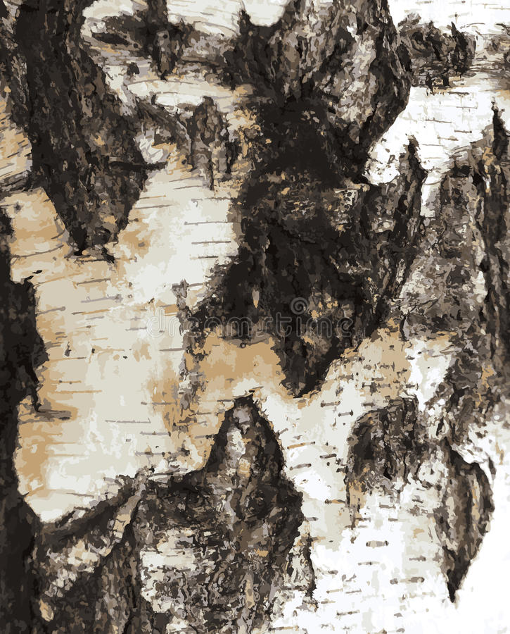 Download Birch bark texture pattern stock vector. Image of natural - 42673024