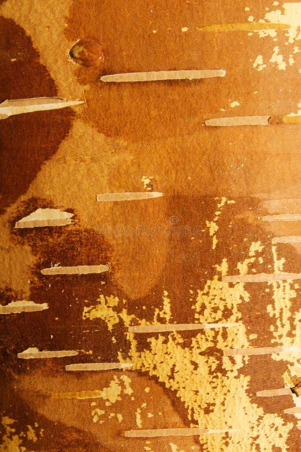 Birch bark tree royalty free stock image