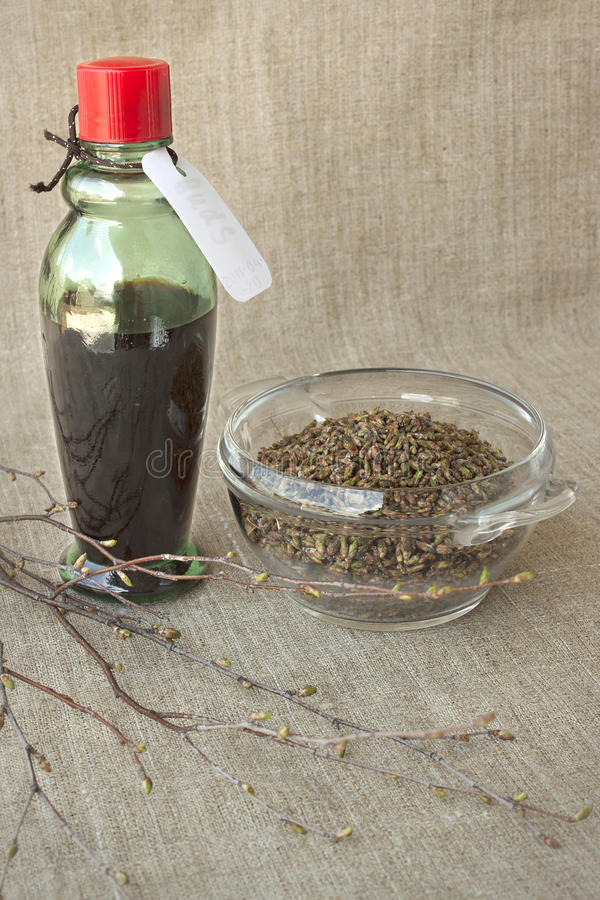 Download Birch Buds And Medicinal Tincture Made From Them Stock Image - Image: 19380471