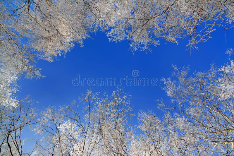 Birch Covered With Rime Stock Photography