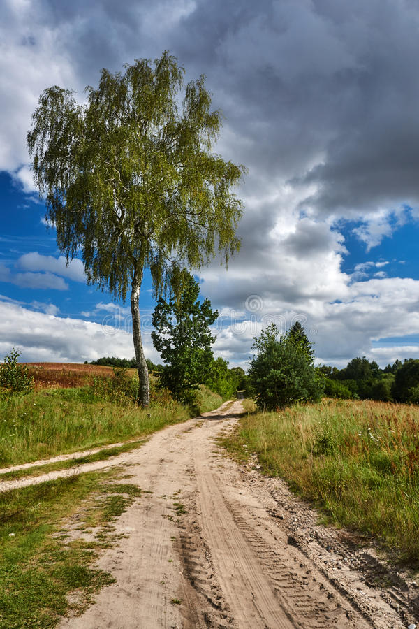 Birch at the crossroads of rural roads royalty free stock photo