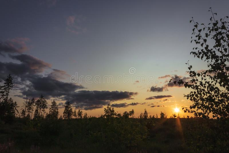 Birch in the field at sunset royalty free stock photography