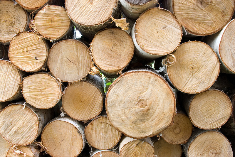 Birch fire wood royalty free stock photography