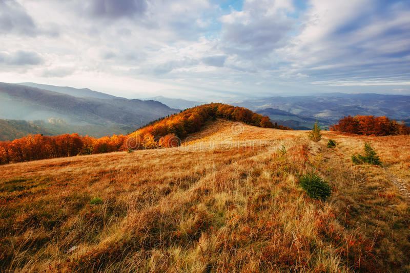 Birch forest in sunny afternoon while autumn season royalty free stock images