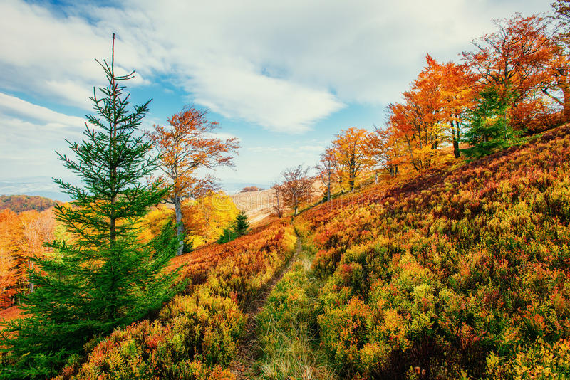 Birch forest in sunny afternoon while autumn season stock images