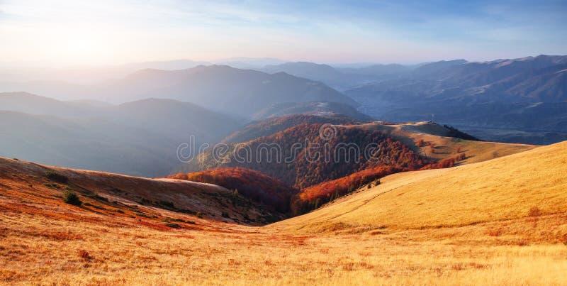 Birch forest in sunny afternoon while autumn season. Autumn Landscape. Ukraine. Europe stock photos