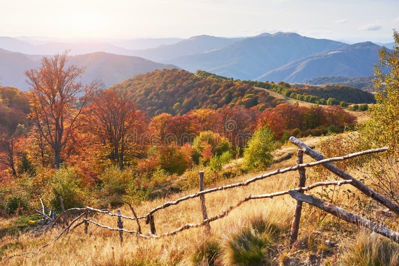 Birch forest in sunny afternoon while autumn season. Autumn Landscape. Ukraine. Europe. Birch forest in sunny afternoon while autumn season. Autumn Landscape stock images