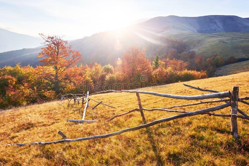 Birch forest in sunny afternoon while autumn season. Autumn Landscape. Ukraine. Europe. Birch forest in sunny afternoon while autumn season. Autumn Landscape stock image