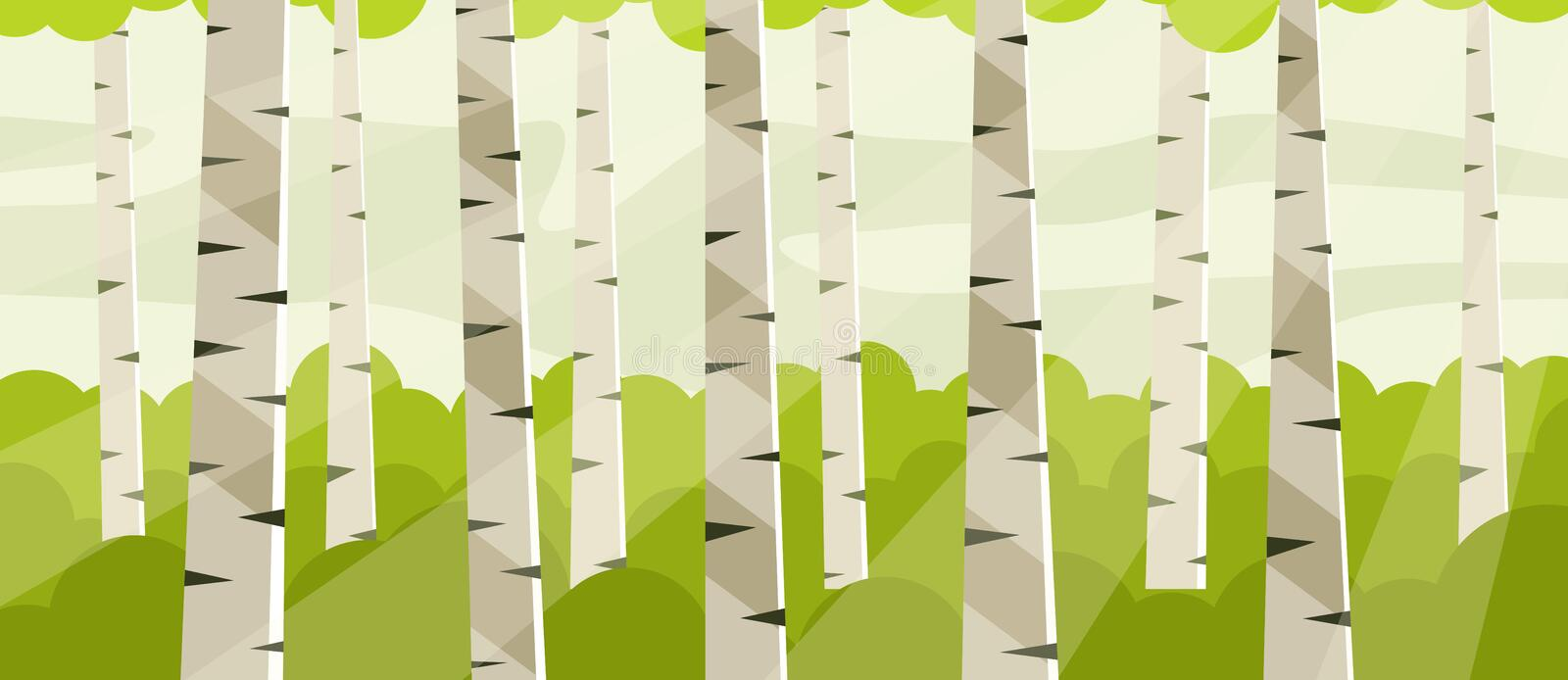 Birch grove at noon. Birch tree trunks stock illustration