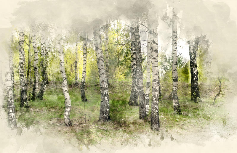 Birch Grove. The Birch Grove. Watercolor background vector illustration