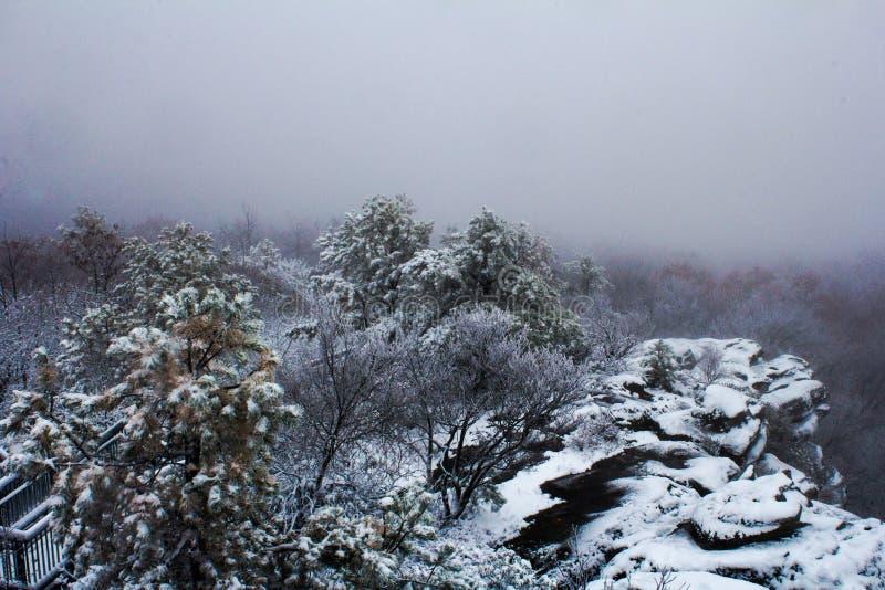 Birch_Knob_Winter royaltyfria bilder
