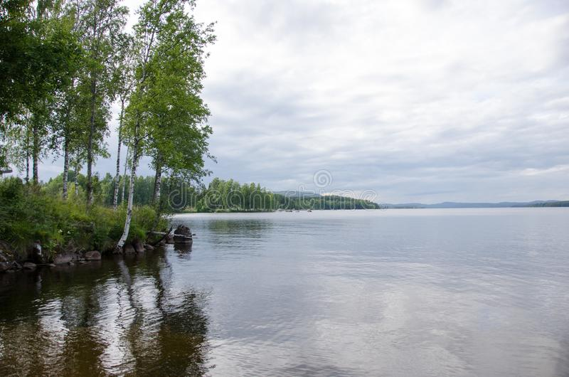 Birch by the lake. Birch by Lake Harnebo in Sweden royalty free stock photography