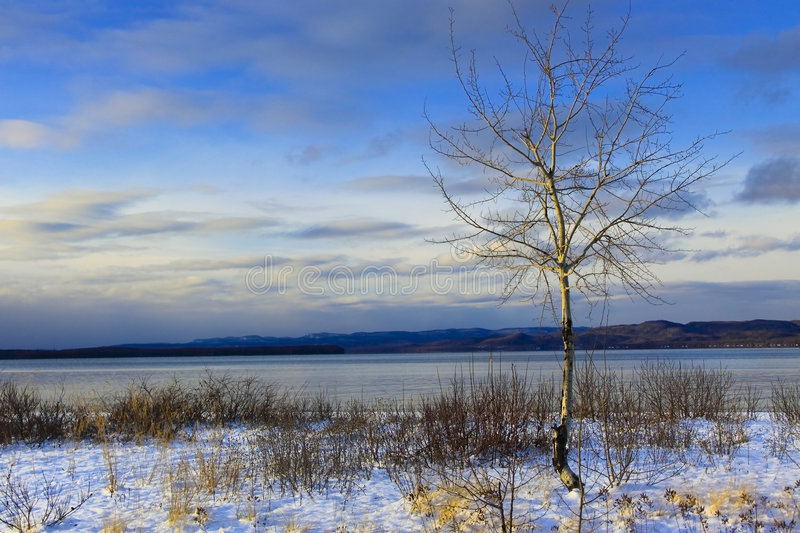 Download Birch - Lake Superior stock photo. Image of beach, tree - 7186028