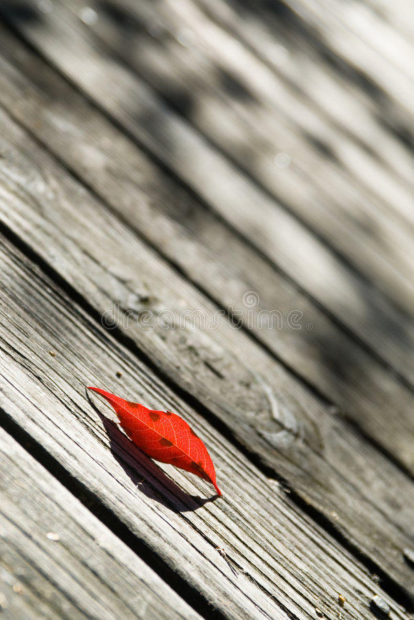 Birch leaf stock image