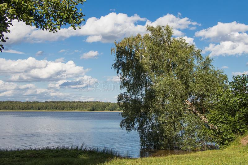 Birch leaning to the lake. Stropskoe Lake, Daugavpils, Latvia. Beautiful summer landscape. Birch leaning to the lake. Stropskoe Lake, Daugavpils, Latvia royalty free stock image