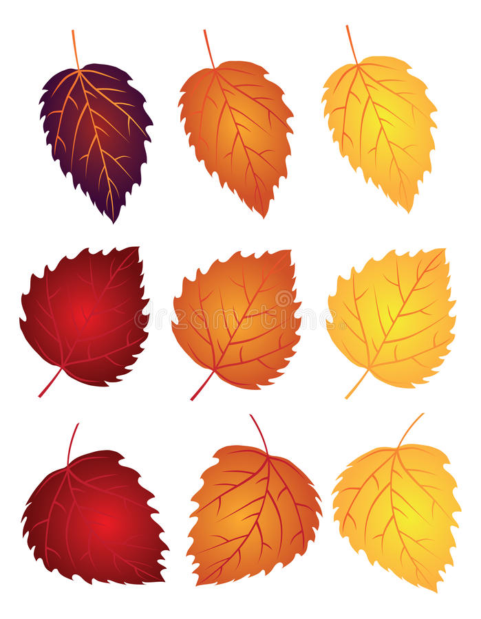 Birch Leaves in Fall Colors Vector Illustration. Birch Tree Leaves in Changing Fall Colors Isolated on White Background Vector Illustration royalty free illustration