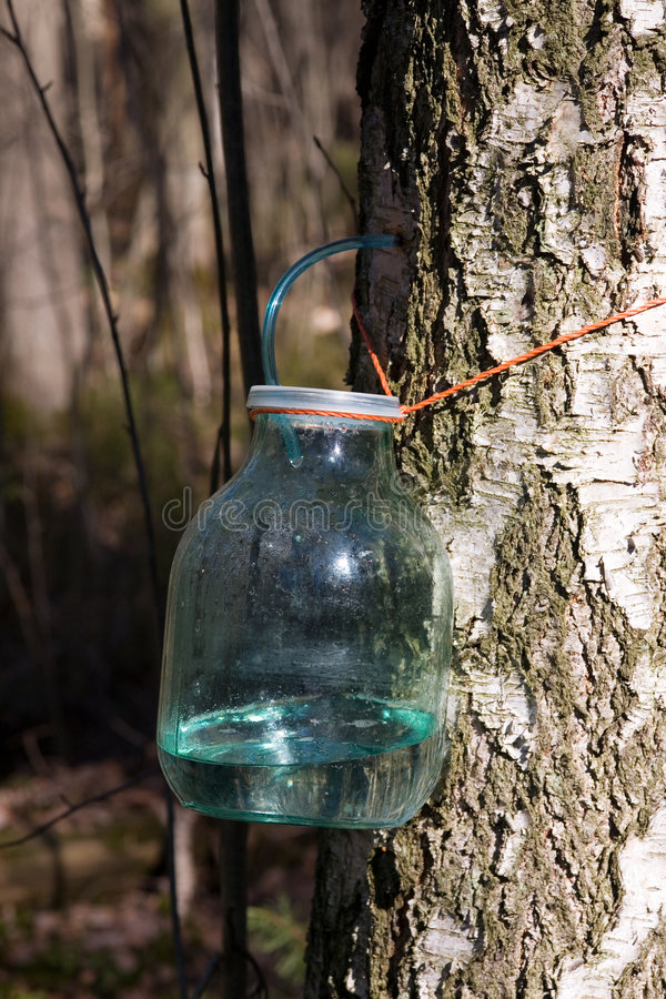 Download Birch sap stock image. Image of handicraft, tree, extraction - 2189277