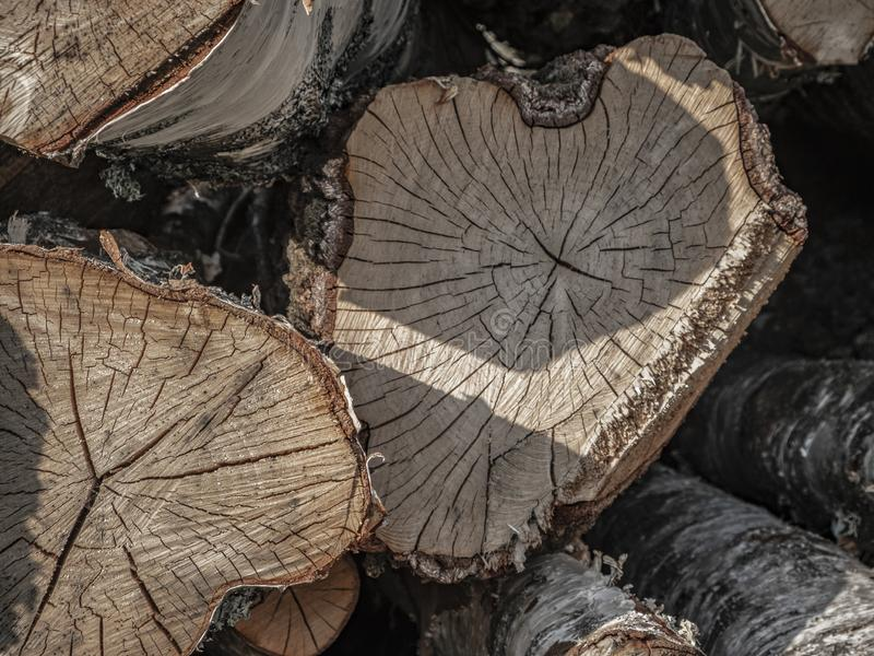 Birch timber piled up royalty free stock photo
