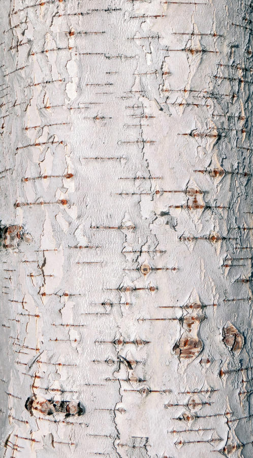 Birch tree bark texture stock images