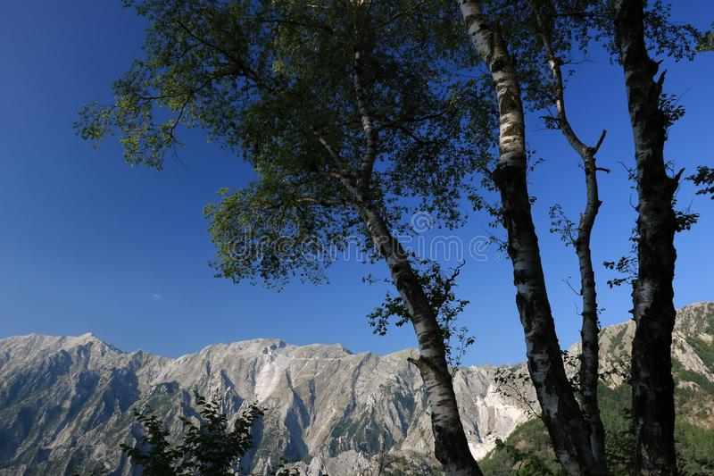 Birch trees in the Apuan Alps in Versilia. In the background the stock images