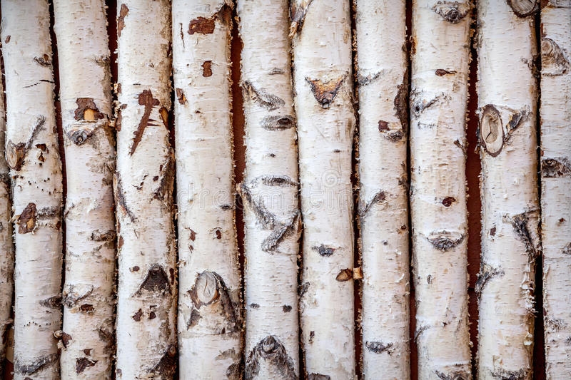 Birch trees. Close up of birch trees stock photography