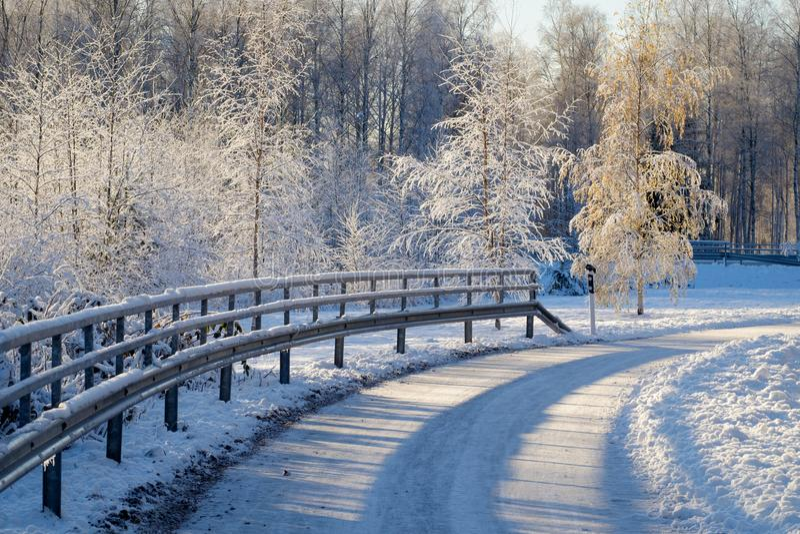 Frosty trees stock photos