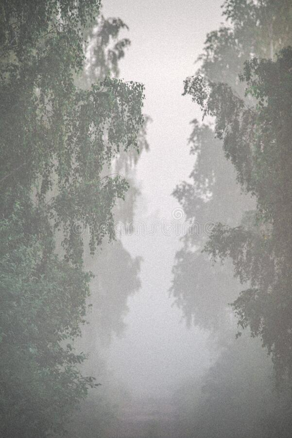 tree tunnel in mist royalty free stock images