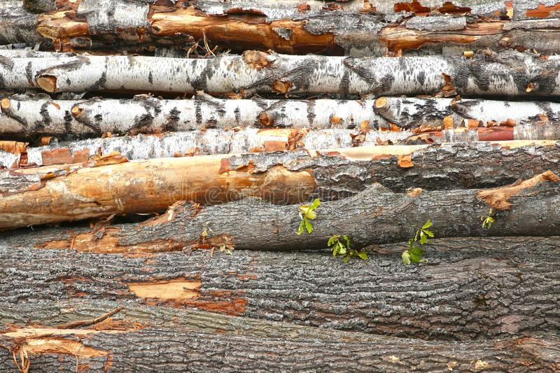 Birch trunks big pile horizontal row close up background rustic building material logging royalty free stock photography