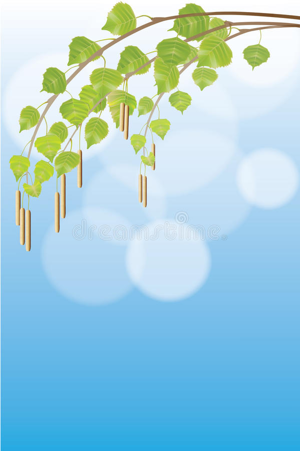 Download Birch twig stock illustration. Image of green, svazhy - 24088601