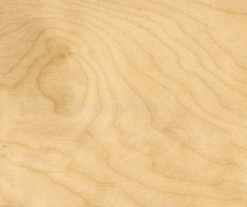 Birch wood background royalty free stock photo