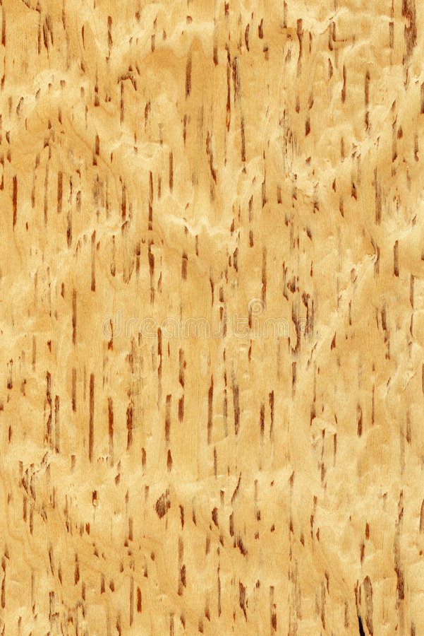 Birch wood texture royalty free stock photo image
